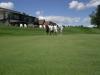 golf-2013-34